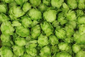 hops cones